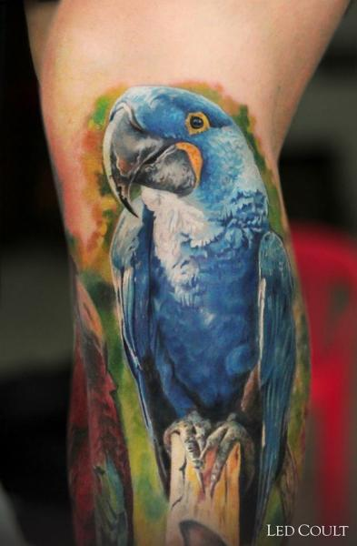 Blue Parrot Realistic tattoo by Led Coult