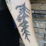Branch of Cedar Tattoo on Arm